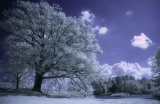 Infrared tree|48