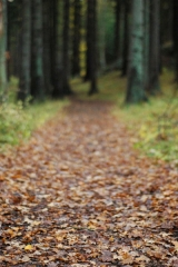 Autumn forest path|51
