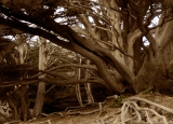Pfeiffer beach - Big Sur - California|398