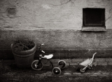Bike and wheelbarrow|537