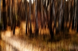 Autumn forest|613
