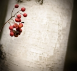 Red berries in late autumn|626